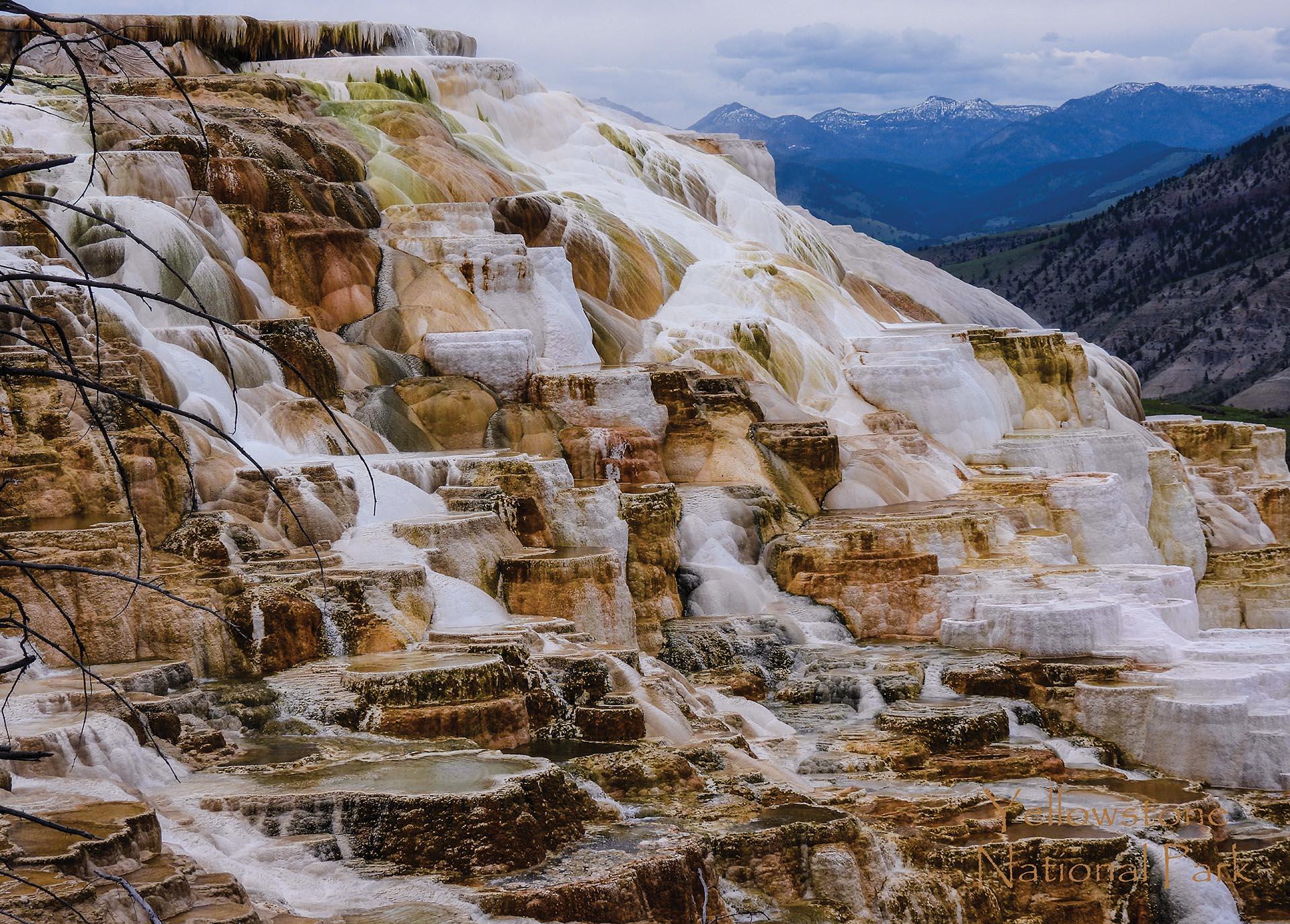 21044 Yellowstone Canary Spring web
