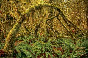 Olympic National Park Hoh Rainforest